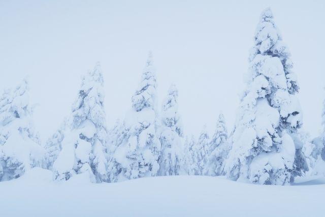 【山形】気温があと「3℃上昇」してしまうと、蔵王の樹氷が消滅してしまう可能性も