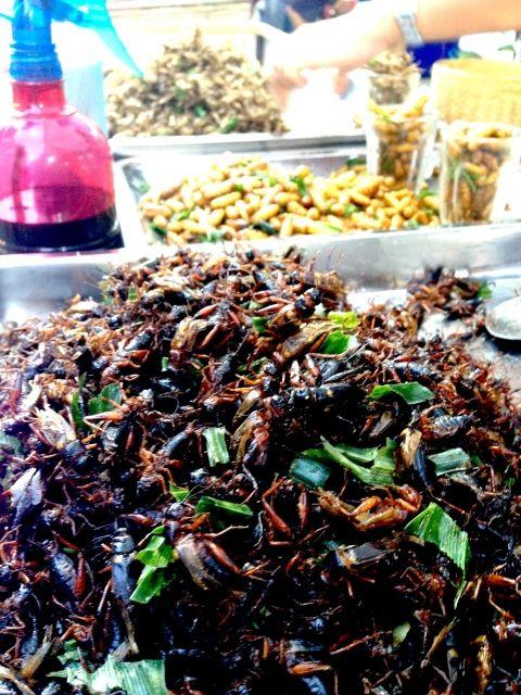【近未来】2050年には人口98億人…もはや「昆虫」を食べるのが当たり前となる時代に
