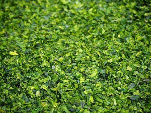 【食べて応援】福島産の「海苔」7年ぶりに出荷再開…検査結果で国の基準を下回る