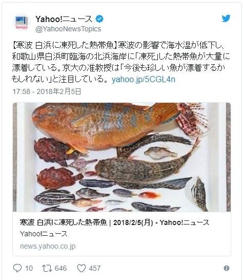 【寒波】和歌山の海岸に大量の「熱帯魚」が漂着…京大教授「2011年以来の大量漂着」