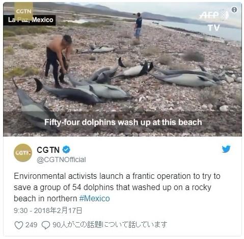 【異変】メキシコのラパス湾で「イルカ・54頭」が海岸に打上げられているのを発見
