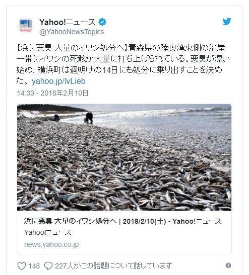 【青森】陸奥湾で「イワシ」の大量打ち上げ…沖合で弱っている他のイワシの群れも確認