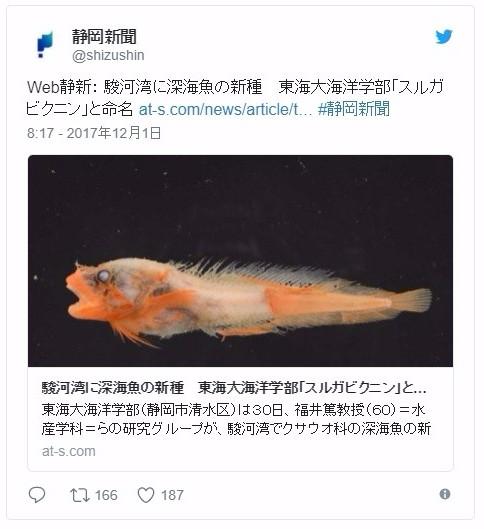【深海】静岡県・駿河湾沖1500メートルで新種の深海魚を発見…クサウオの仲間で「スルガビクニン」と命名