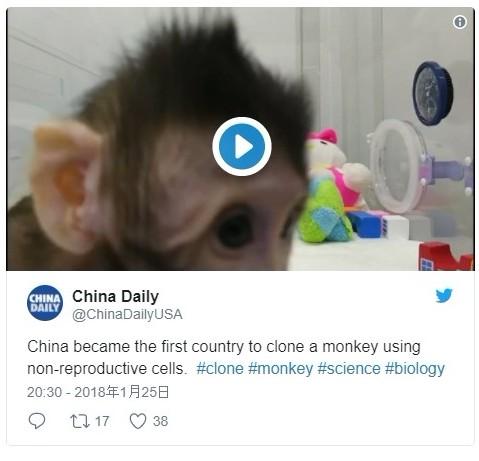 【中国】クローン技術で「サル」を作り出すことに成功