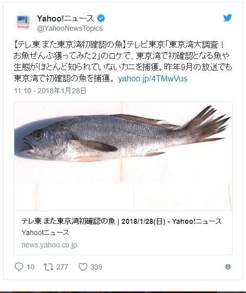 【深海】テレビ東京の番組が東京湾で初確認の定説を覆す「魚」をまたも発見!