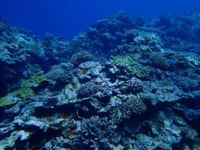 【緊急事態】オーストラリアの貝礁が「全て消滅」…海洋生態系に大危機が訪れている