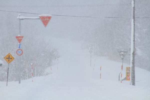 snow5387686.jpg