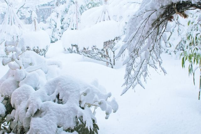 【ロシア】モスクワで観測史上最大の大雪に…1日で「43cm」も積もる