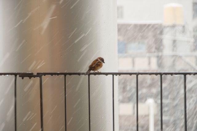 【首都】平年より3日早く、東京でも「初雪」を観測
