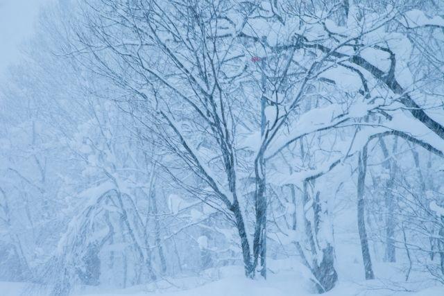 【北海道・東北】猛吹雪で見通しが全くきかないおそれあり…警戒を呼び掛け