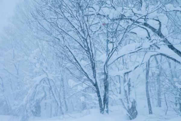 snow78657856.jpg