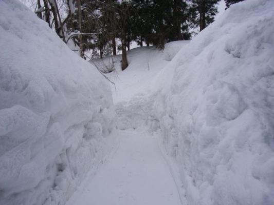 snow786786.jpg