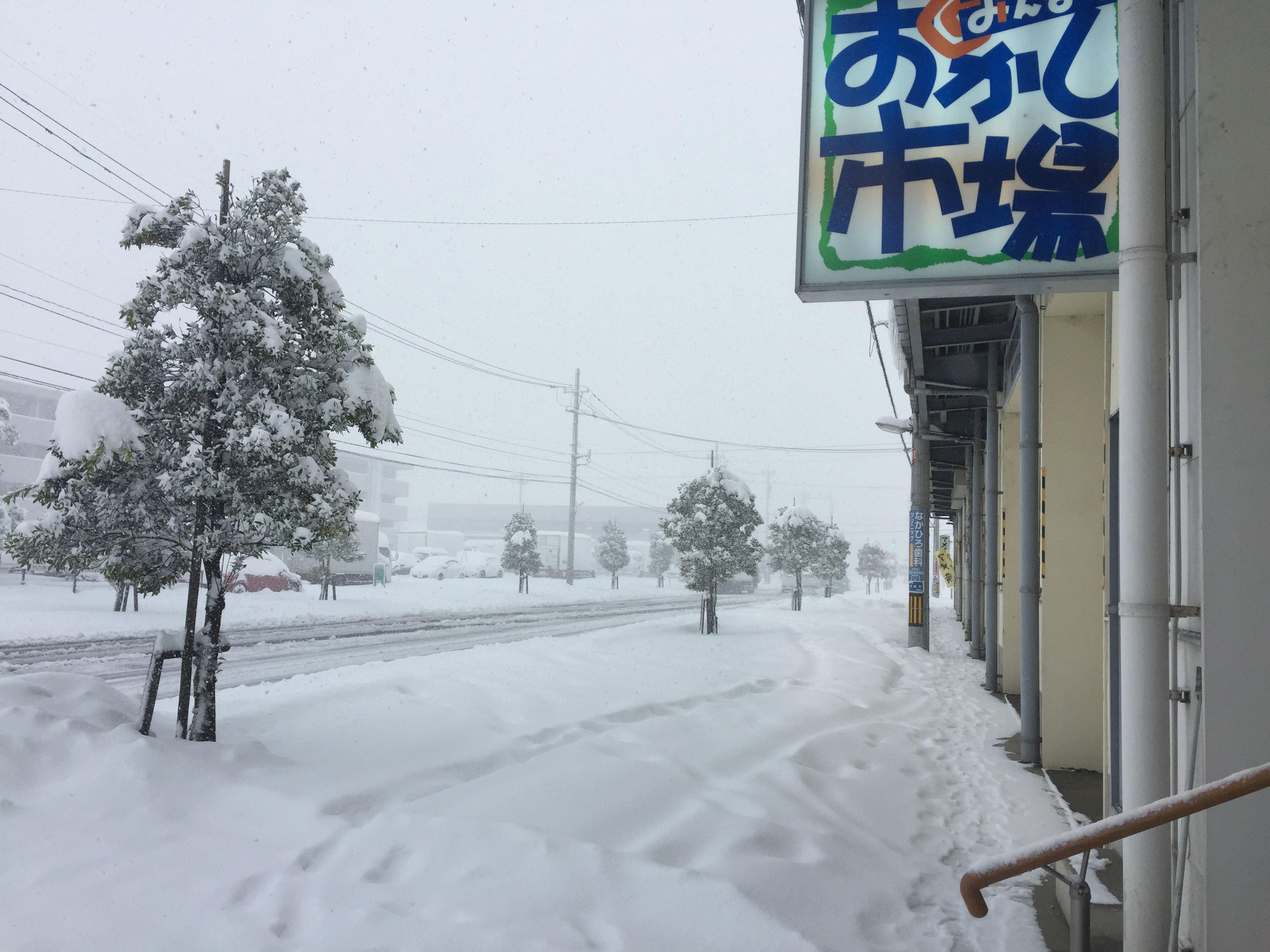 1月12日雪1
