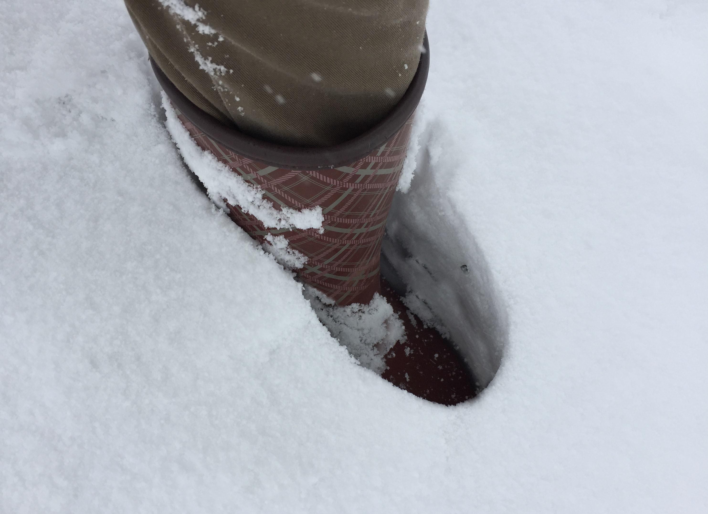 1月12日雪3