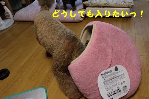 IMG_9981_1_R.jpg