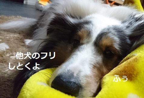 DSC_7683.jpg