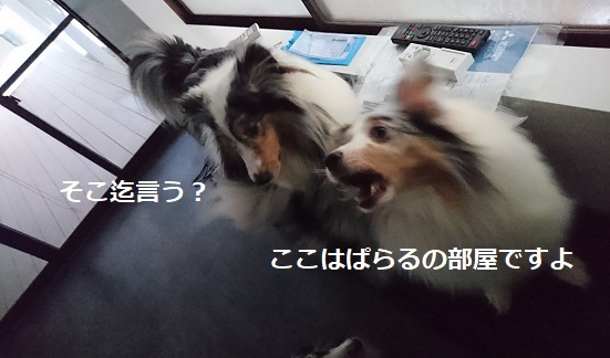 DSC_7889.jpg