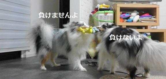 MOV_6599(2).jpg