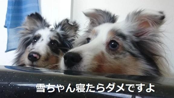 MOV_7349_000008.jpg
