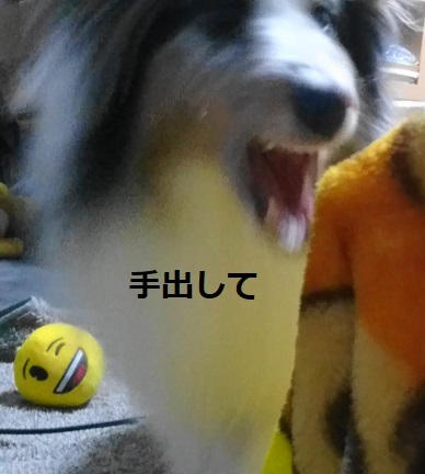 MOV_7592(2).jpg