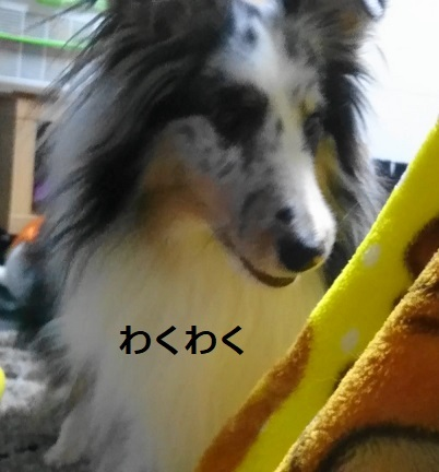 MOV_7592(3).jpg