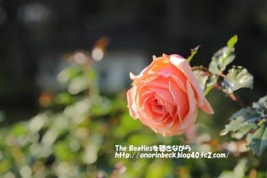 IMG_2017_12_10_9999_199.jpg