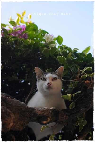 タイのヲソト猫181★2017猫撮り収め01