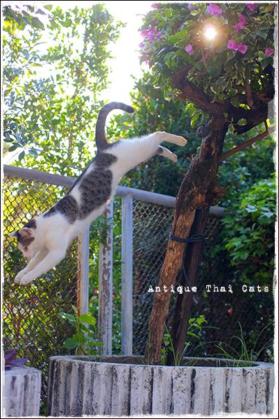 タイのヲソト猫181★2017猫撮り収め03