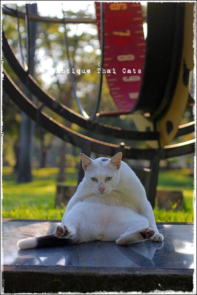 タイのヲソト猫182★2018猫撮り初め7