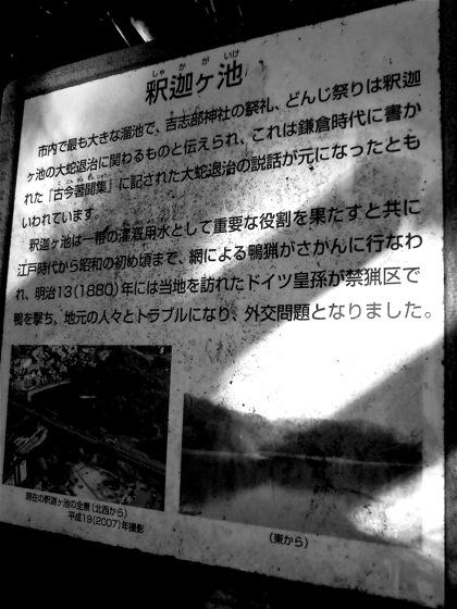 syakagaikeNEC_0051.jpg