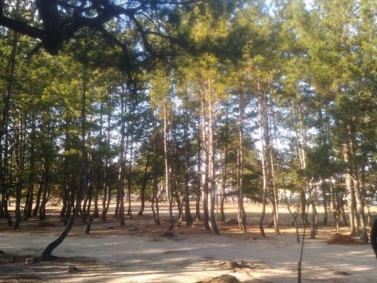 HigashikagawaShirotori_008_org.jpg