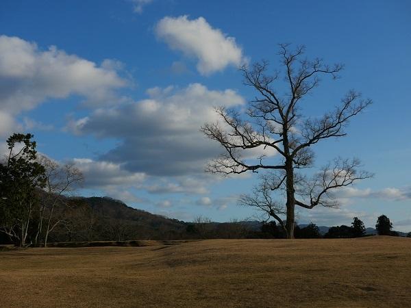 人間の神経だけを取り出したような木