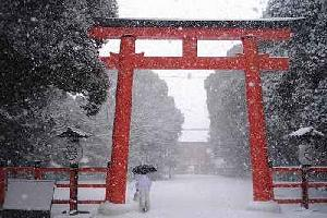 wintermiyagi.jpg