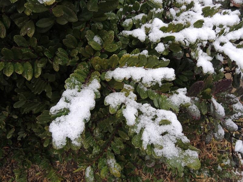 初積雪 その2
