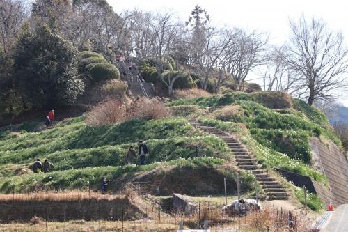千早赤阪村スイセンの丘