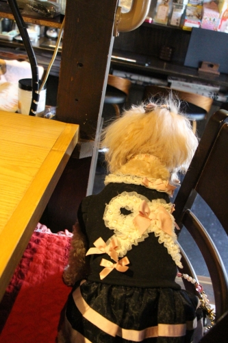 Bistro Cafe +Dog Rencontre