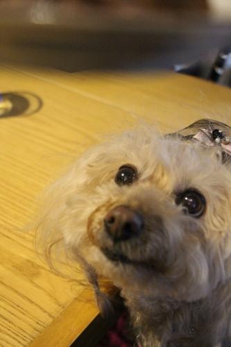 Bistro Cafe +Dog Rencontre