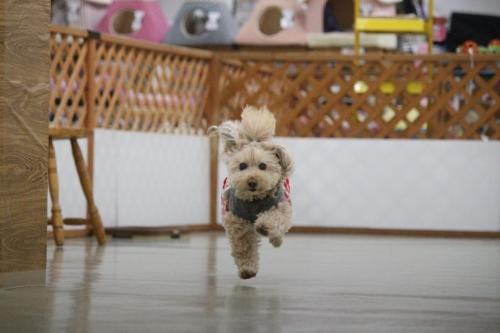 ペットパートナーズ宝塚店