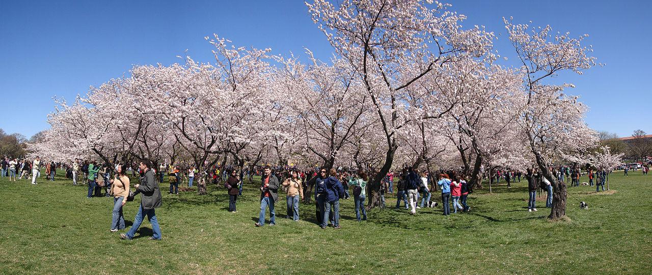 ナショナル・モールの桜並木の中の観光客2009年4月5日