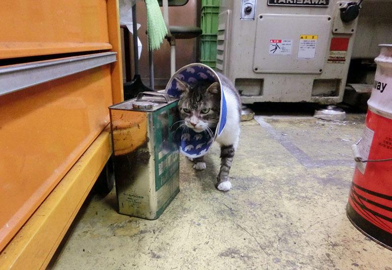 イワキ精工 蒲田 パンタレイ panta rhei 大田区 池上 ギャラリー ねこ 猫 工場長