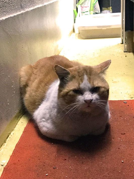 イワキ精工 蒲田 パンタレイ panta rhei 大田区 池上 ギャラリー ねこ 猫