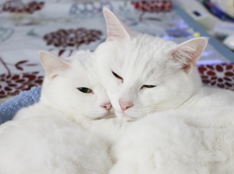 パンタレイ panta rhei 大田区 池上 ギャラリー ねこ 白猫