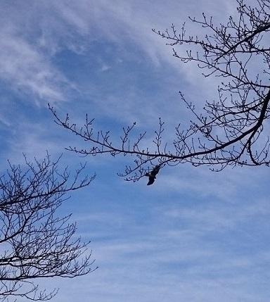 線香花火みたいな枝と鳥さん