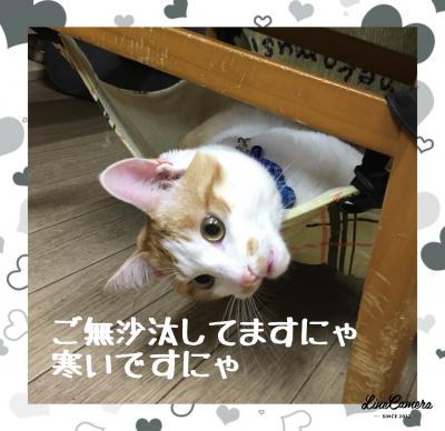 fc2blog_201801261411375d4.jpg