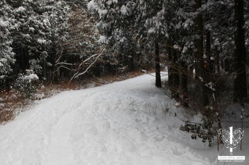 사려니숲길-(2)