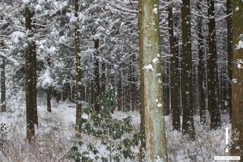 사려니숲길-(3)