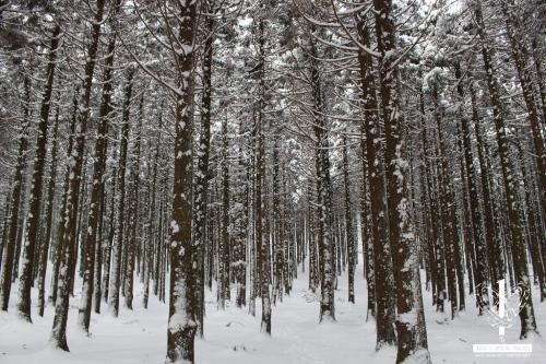 사려니숲길-(8)