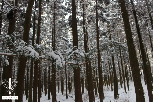 사려니숲길-(9)