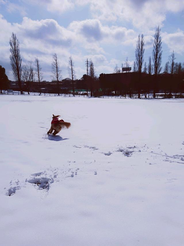 雪のとあるひ