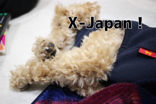 x7KNGXd_5rsCRoB1514564089_1514564179.jpg